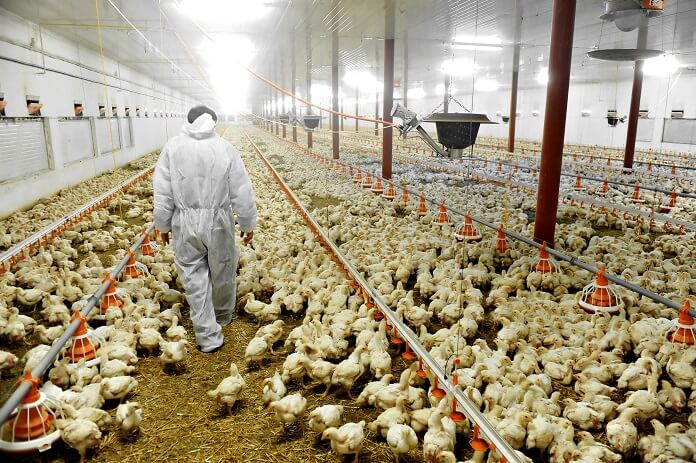 Vi har længe advaret om risikoen for virusmutation i landbrugsdyr - Nyheder fra servicebranchen - ServiceNews