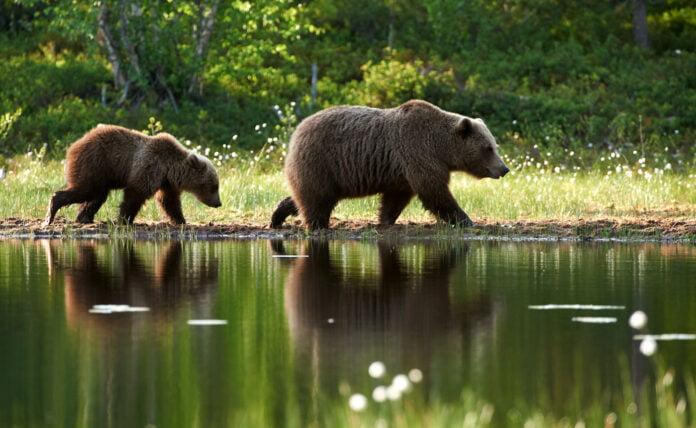 Safarirejse Fotorejse til Finland med naturfotograf Lars Gejl april 2022 31c6328e